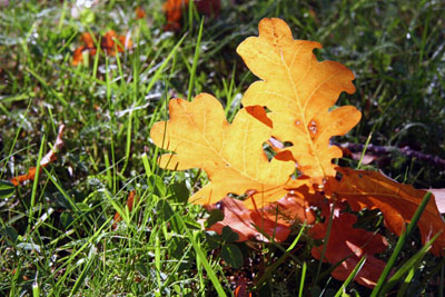 Fall_contrasts_2
